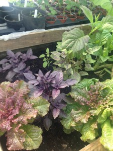 Beautiful salads on an ouside bed.